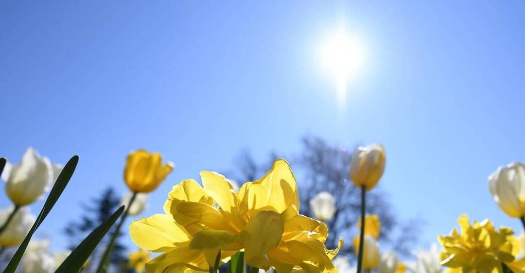 Синоптики спрогнозували спеку в Україні